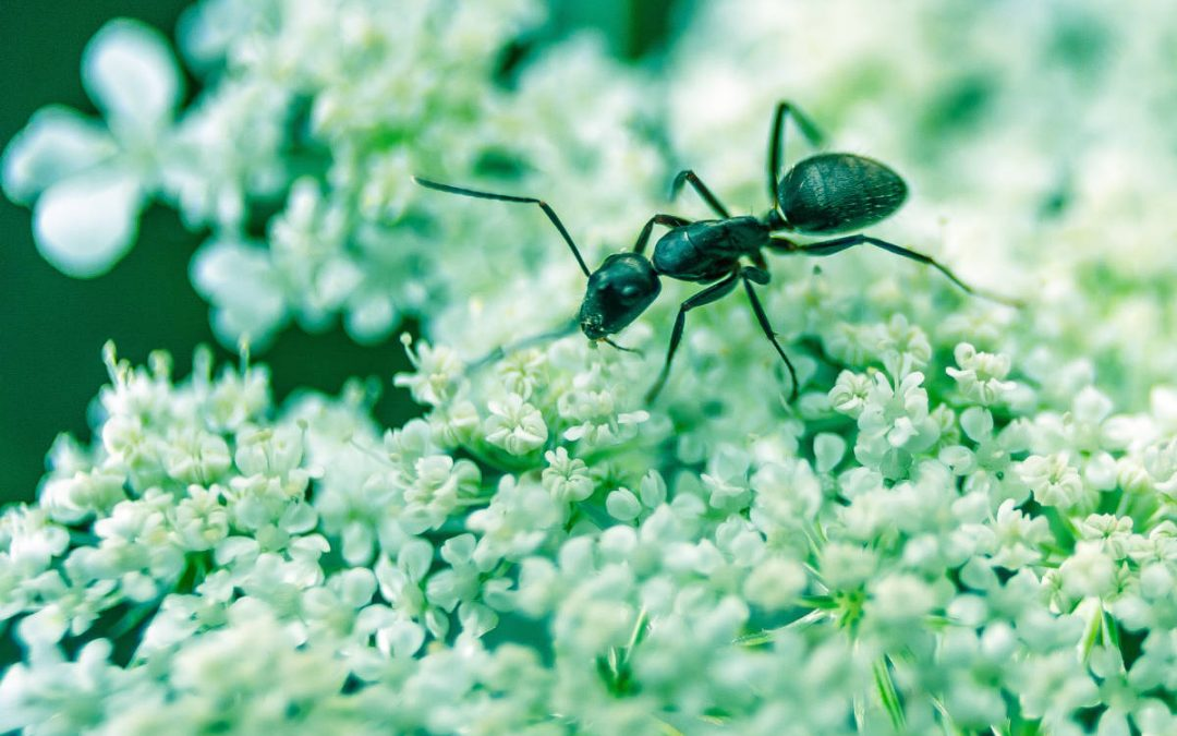 How To Stop Ants Entering Your Home