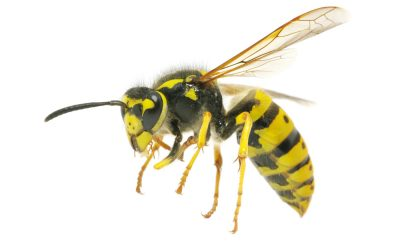 Wasp Nests: How to Spot Them