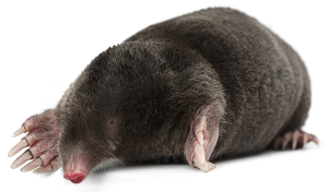 mole-control-bristol