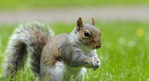 squirrel control bristol