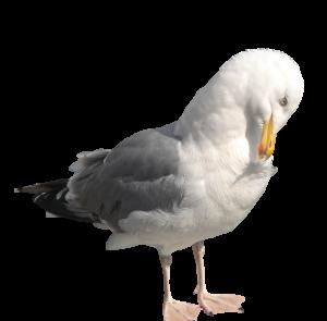 gull-control