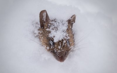 How To Defend Against Winter Pests