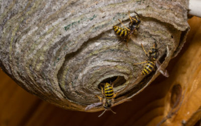 5 Ways To Keep Wasps Away From Your Property