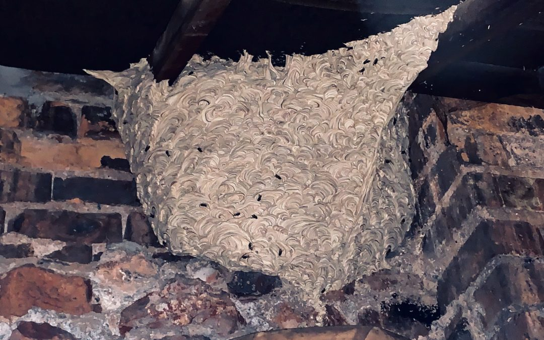 Why You Should Call Pest Control When You Have A Wasp Nest?
