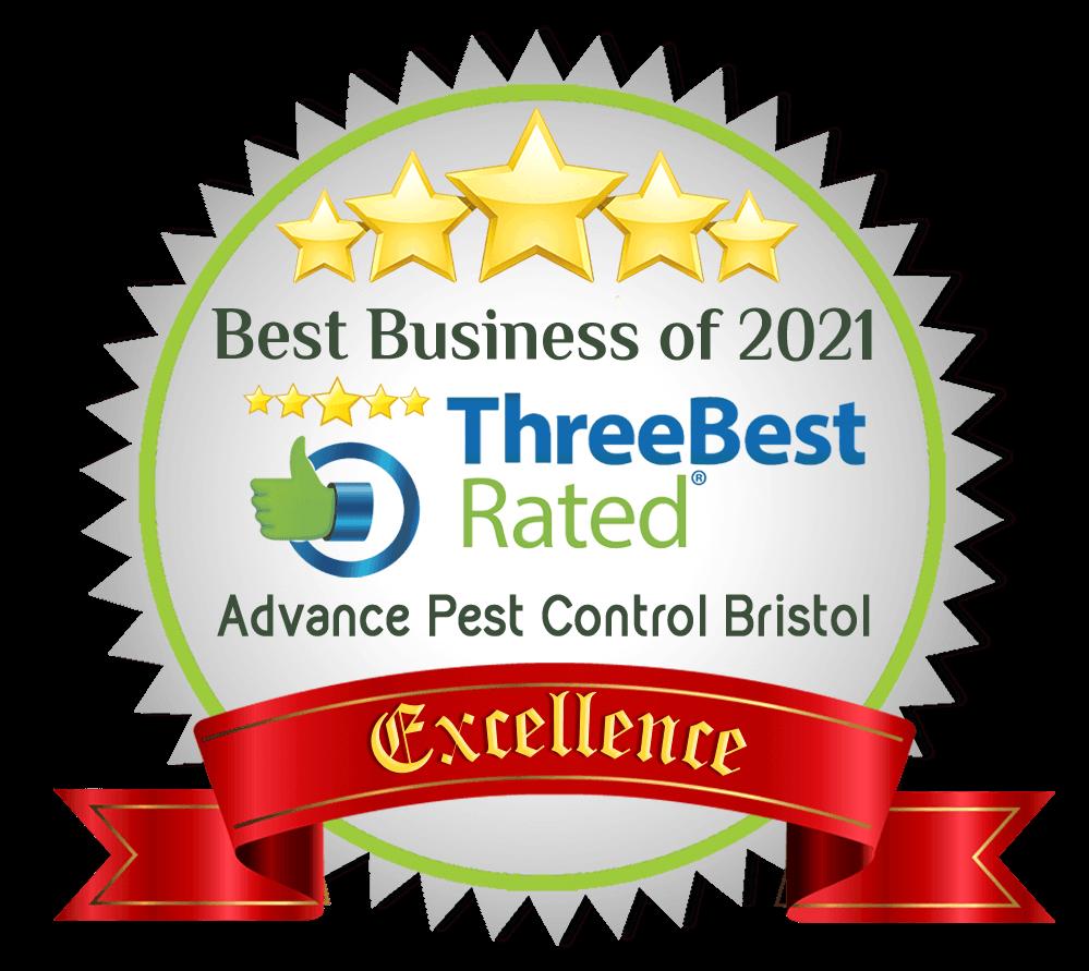 Best Pest Control in Bristol