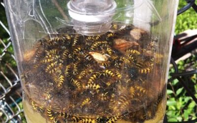 How To Make Wasp Traps